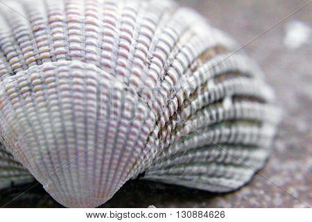 A shell found on an island beach.