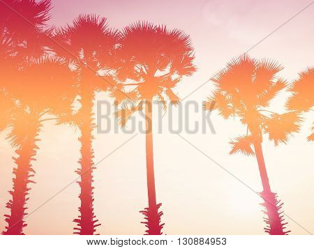 Look up silhouette palm trees at sunset vintage filter effect