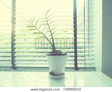 small plant on white desk beside window soft style with vintage filter effect.