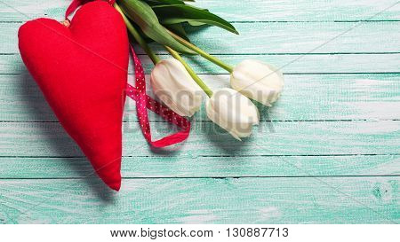 Bunch of white tulips flowers and decorative red heart on turquoise wooden background. Selective focus. Place for text. Toned image.