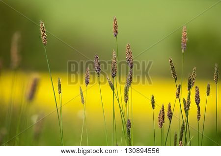 Grass On Meadow With Color Background