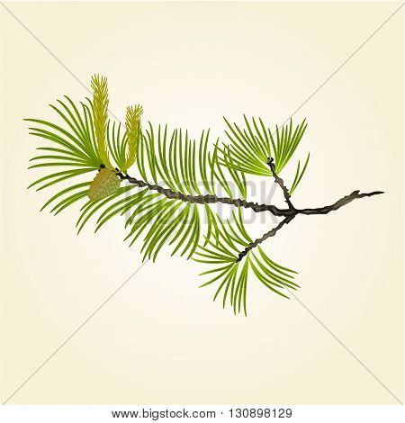 Blooming pine tree Branch natural background vector illustration