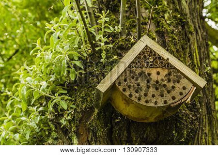 Built home for bee hanged on a tree.
