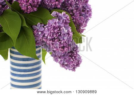 Bouquet Of Violet Lilacs In A Striped Ceramic Vase..