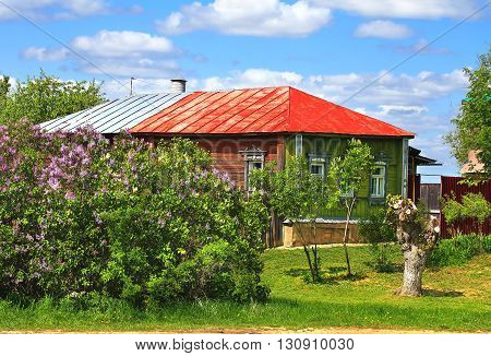 Wooden house with red roof among bushes of blooming bird cherry