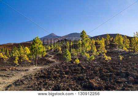 Hiking trail leading through arid volcanic landscapes El Teide and Pico Viejo peaks on background
