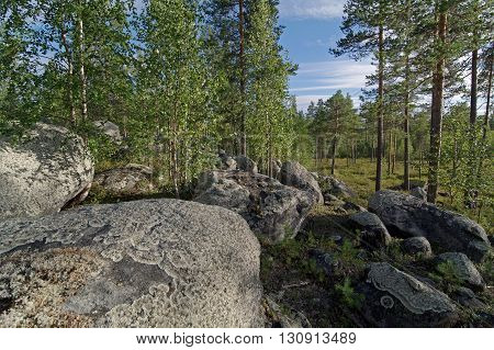 Big boulders in the northern forest. Karelia Russia.