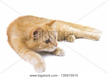 nature, one cat isolated on white background