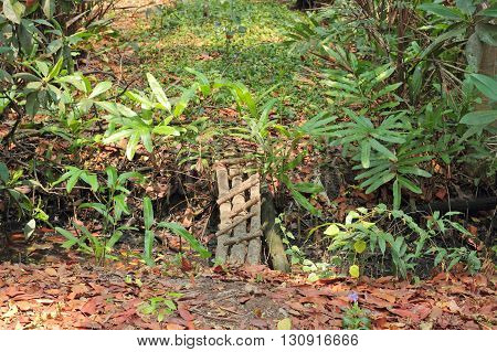 Wooden bridge in tropical forest at Thailand