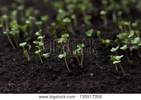 Small Vegetables