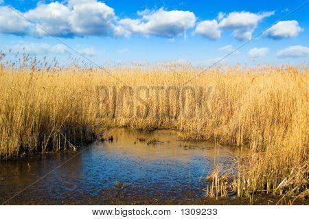 The Marshland.
