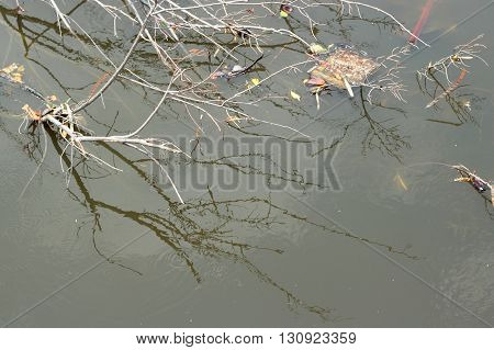 Lake With Dead Wood