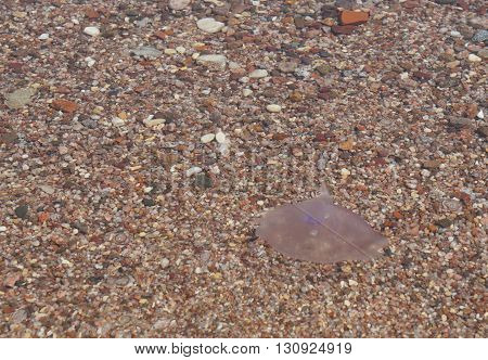 Small jellyfish drifting in a deep water
