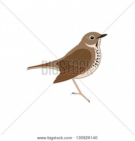 Stylized brown thrush bird vector illustration isolated on white background.