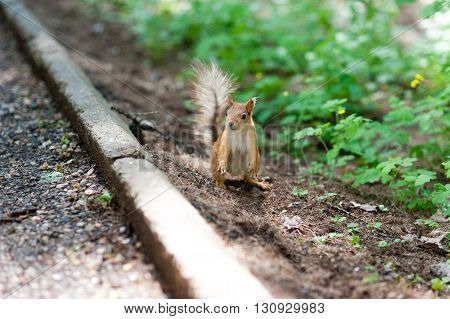 Squirrel in a city park, standing on hind legs