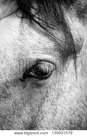 Horse detail, head and eye closeup picture
