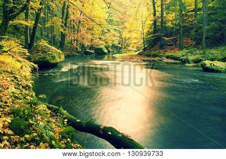 Mossy Fallen Aspen Tree Fallen  In Mountain River. Orange And Yellow Maple Leaves,, Clear Water Make