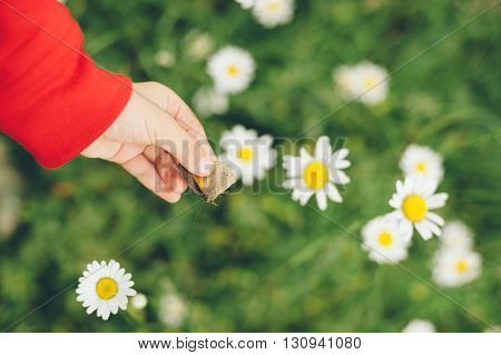 child's hand holding a butterfly on the background chamomile field