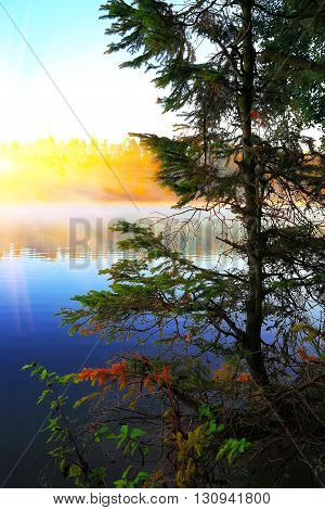 Lonely fir tree growing in a pond at sunrise. blue sky