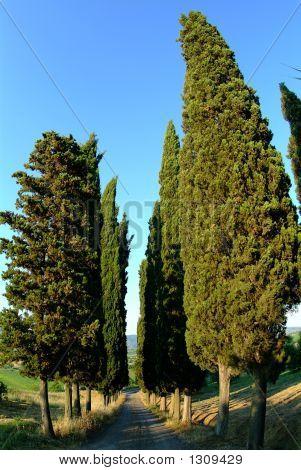 Cypress Avenue