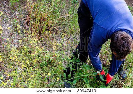 Worker is working hard in a garden
