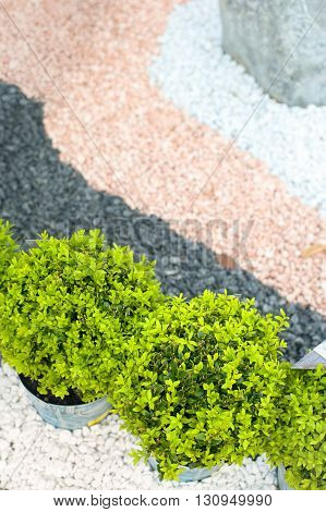 Green plant and colorful pink black and white pebble stone japanese style garden