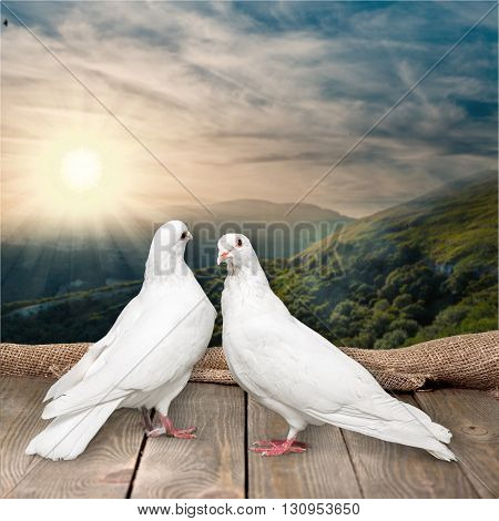Two pigeon.