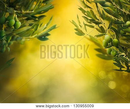 Olives background. Olives on olive tree with bokeh. food background