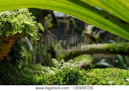 green moss in the garden for background