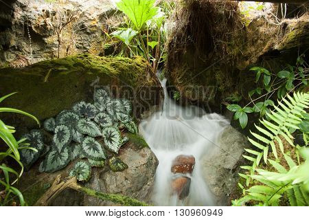 Source of spring in Singapore Botanical Gardens
