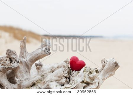 Red heart in a tree trunk on the beach. Romantic symbol of love, Valentine's Day.