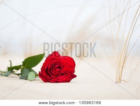 Red rose lying on sand on the beach. Concept of romantic love, romance, but may also symbolize a loss, melancholy, memory of the past etc.