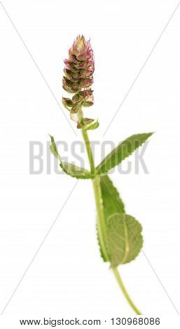 Fresh mint leaves and flower, macro, isolated on white background.