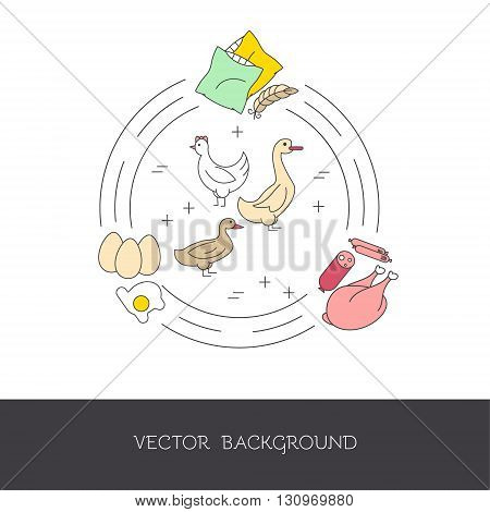 Illustration of poultry and agricultural products (meat eggs feathers). The concept of eco-products and eco-farm. Vector illustration.
