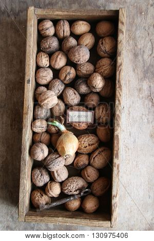 Eat Healthy text and fresh walnuts in a box on an wooden background.