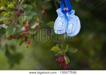 Baby's bootees hanging on tree with  berries