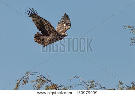flying beautiful birds of prey in the sky