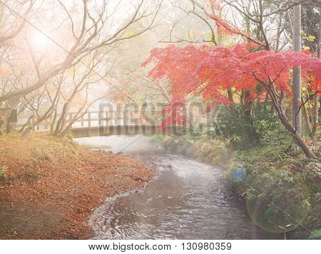 Soft and blur autumn background in Japan