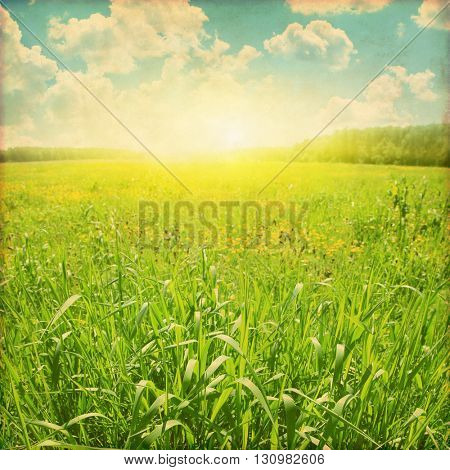 Sunset over green grass field. Grunge style photo.