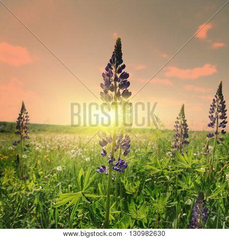Summer field during sunset.