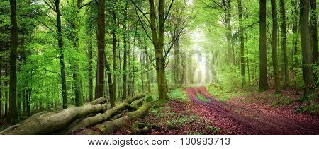 Tranquil spring forest scenery with a path inviting to take a relaxing walk with beautiful soft light