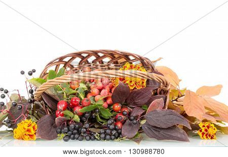Autumn berries, flowers and leaves in a basket isolated on white background.