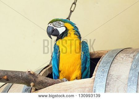 Portrait of a yellow blue macaw parrot