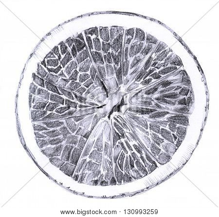 A pencil drawing of a half of an orange isolated on white