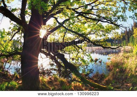 sunbeams through oak tree branches by lake in spring
