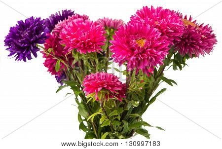 bouquet, magenta aster isolated on white background