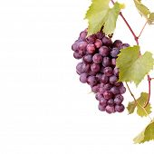 stock photo of grape-vine  - Red grape cluster with leaves isolated - JPG