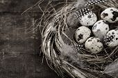 stock photo of bird-nest  - Birds nest with six eggs  - JPG