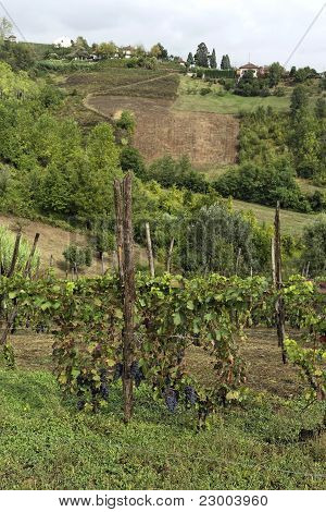Hills Of Monferrato
