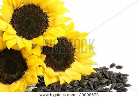 Yellow Sunflowers And Sunflower Seeds